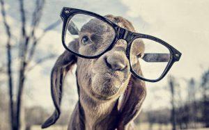 smart-goat-small